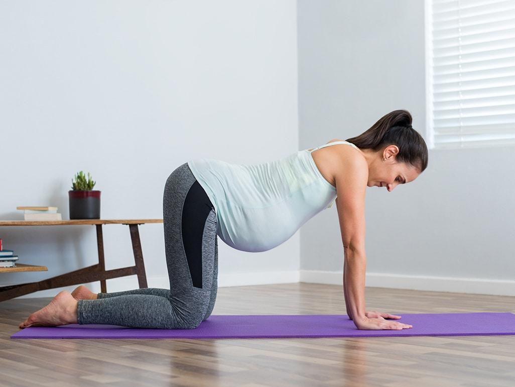 Bài tập yoga tư thế con mèo