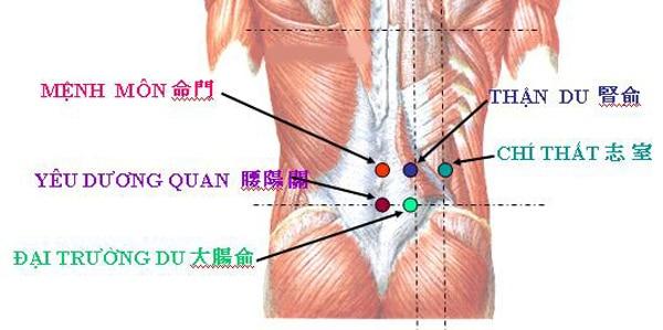 Điều trị đau lưng bằng bấm huyệt thận du
