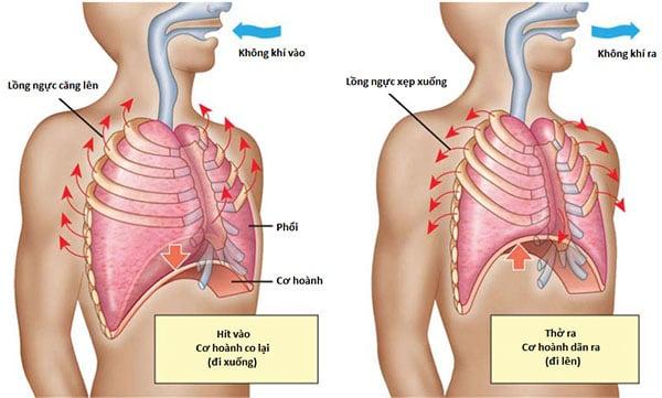Tập thở sâu khi bơi giúp tuần hoàn máu