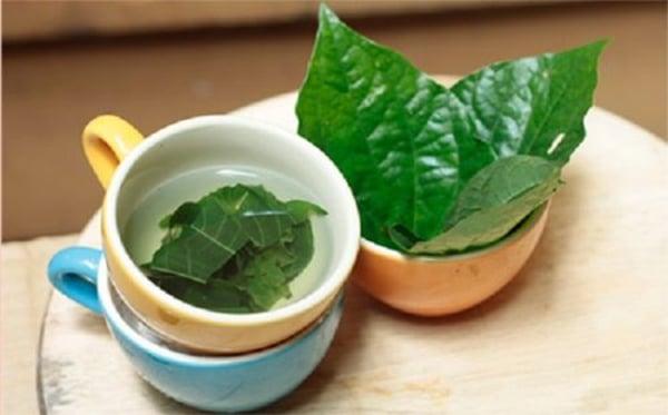Bài thuốc từ lá lốt giúp chữa thoát vị đĩa đệm