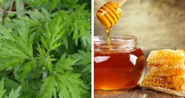 Ngải cứu và mật ong điều trị đau lưng hiệu quả
