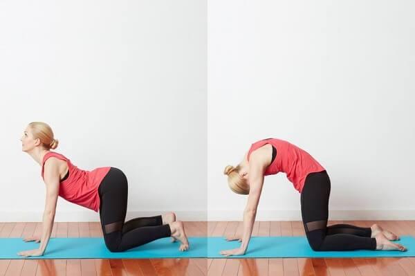 Tư thế con mèo trong yoga